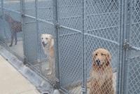 dog_unit_2